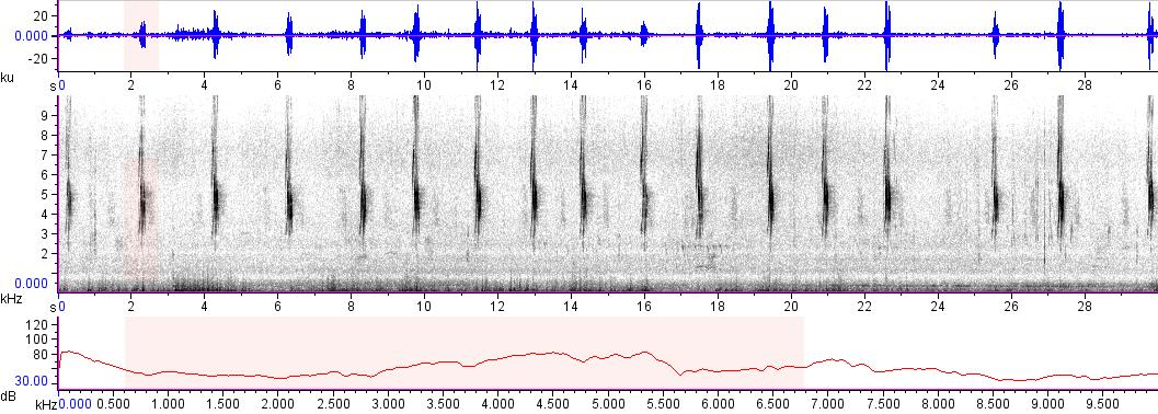 Sonogram of recording #AV 7729