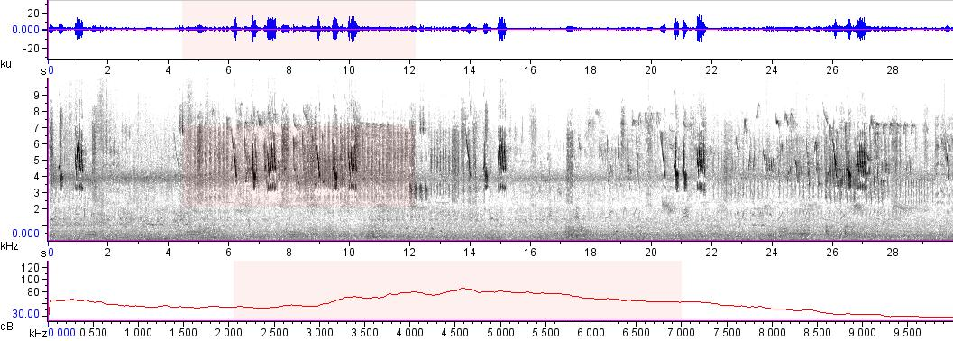 Sonogram of recording #AV 7745