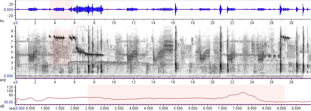 Sonogram of recording #AV 7751