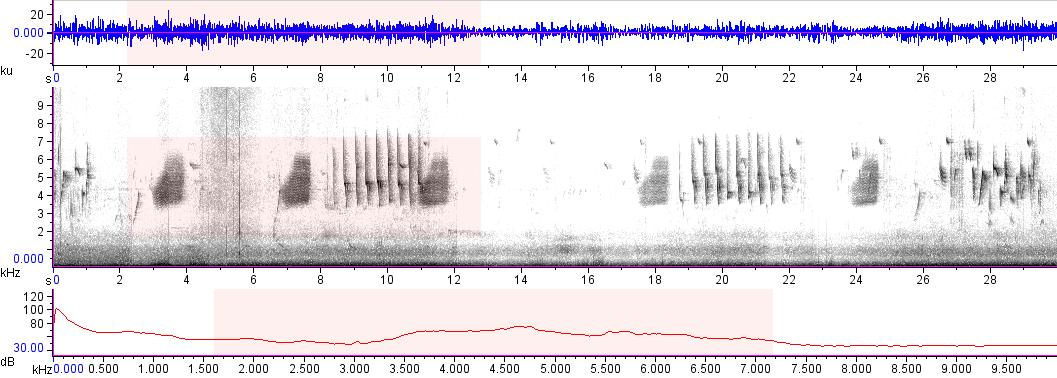 Sonogram of recording #AV 7761