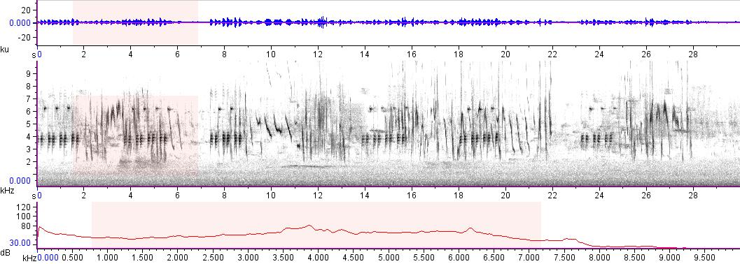 Sonogram of recording #AV 7763
