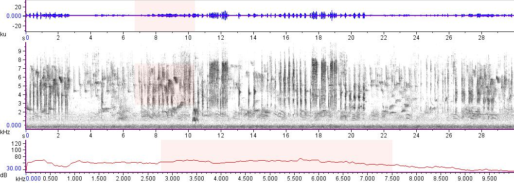 Sonogram of recording #AV 7766