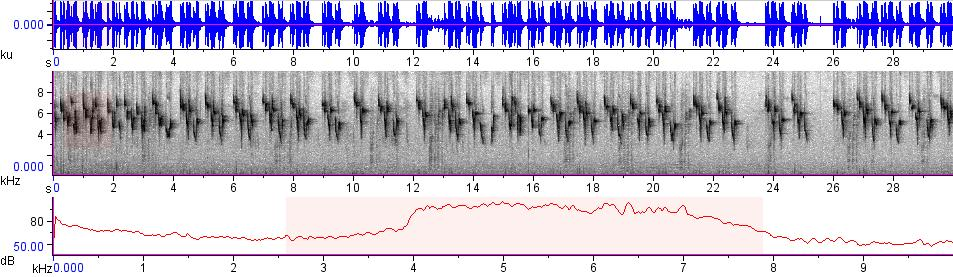 Sonogram of recording #AV 7797