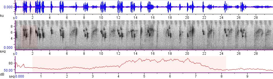 Sonogram of recording #AV 7798