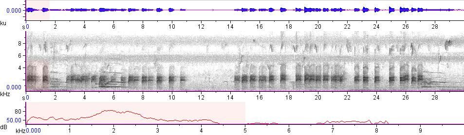 Sonogram of recording #AV 7804