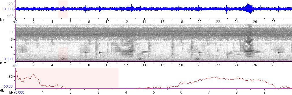 Sonogram of recording #AV 7807