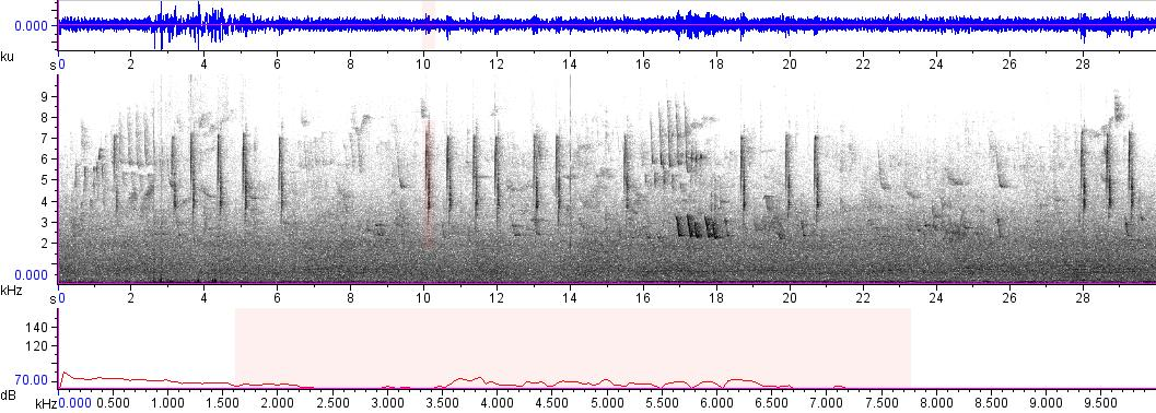 Sonogram of recording #AV 7846