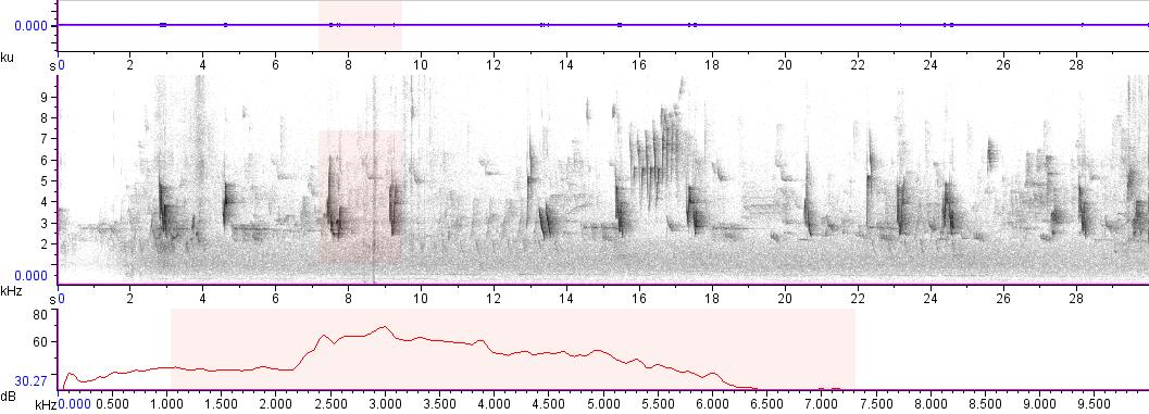 Sonogram of recording #AV 7873