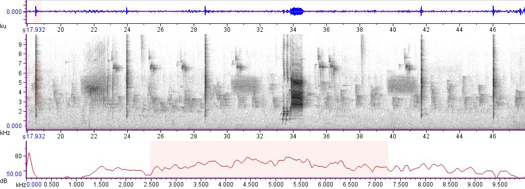Sonogram of recording #AV 7874