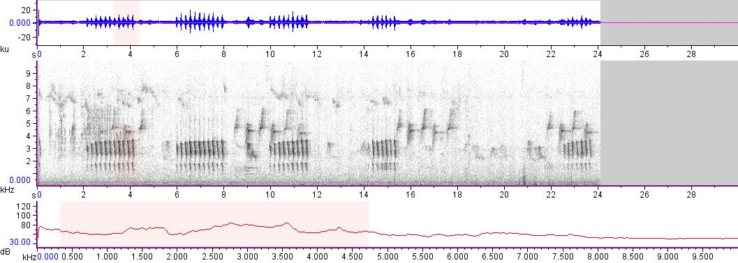 Sonogram of recording #AV 7905