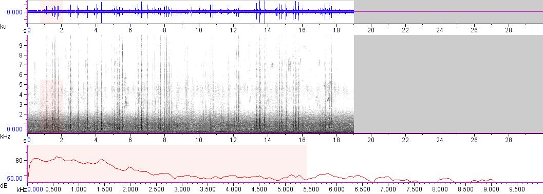Sonogram of recording #AV 7916