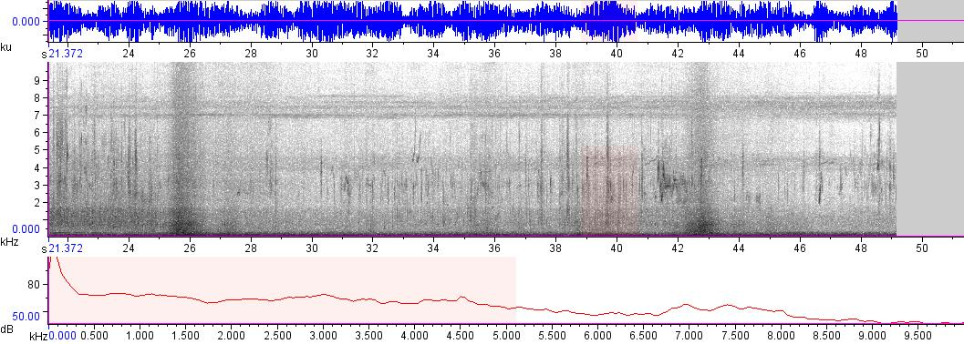Sonogram of recording #AV 7927