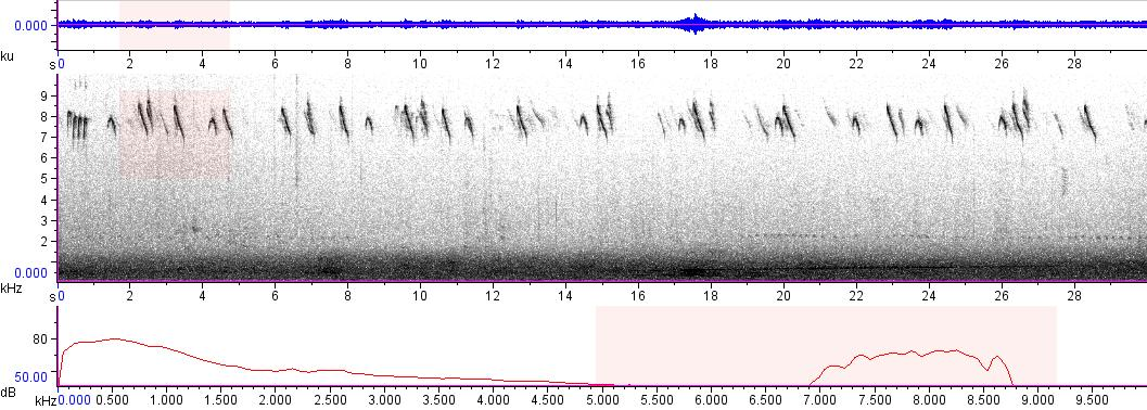Sonogram of recording #AV 7929