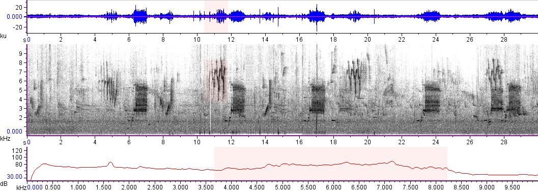 Sonogram of recording #AV 7959