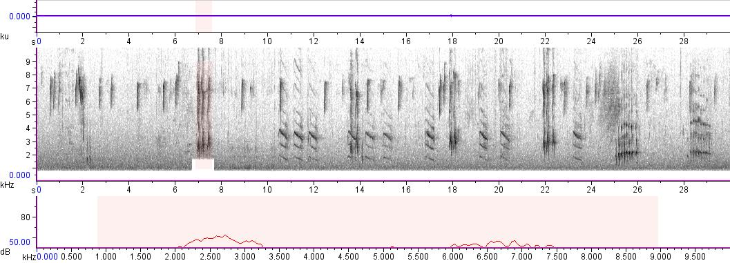 Sonogram of recording #AV 800