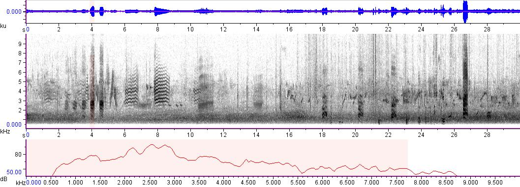 Sonogram of recording #AV 814