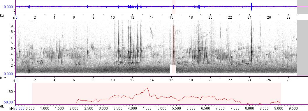 Sonogram of recording #AV 828
