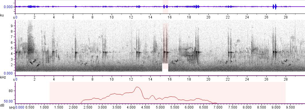 Sonogram of recording #AV 829