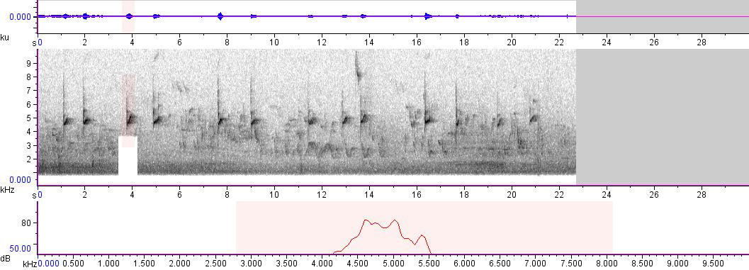 Sonogram of recording #AV 837