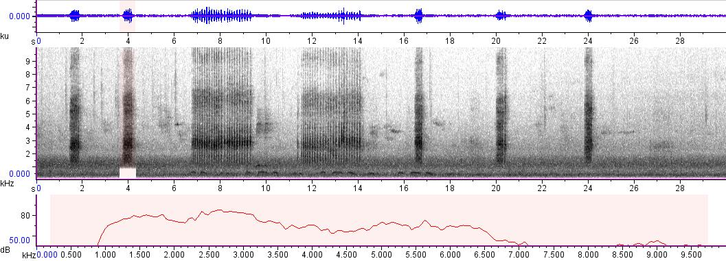 Sonogram of recording #AV 849