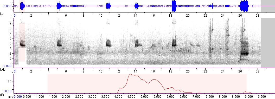 Sonogram of recording #AV 865