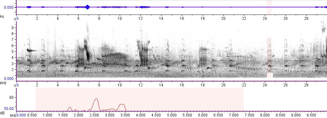 Sonogram of recording #AV 889