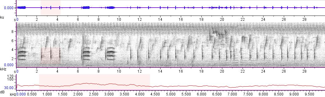 Sonogram of recording #AV 8115