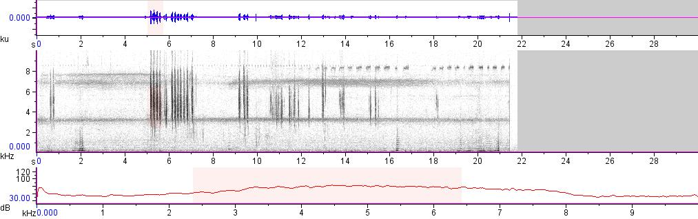 Sonogram of recording #AV 8140