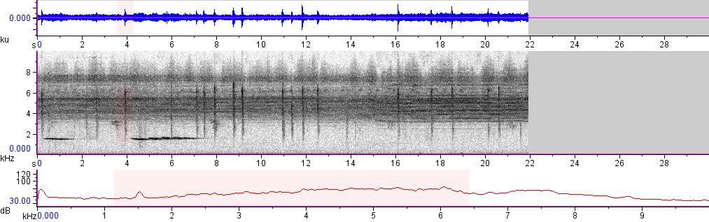 Sonogram of recording #AV 8195