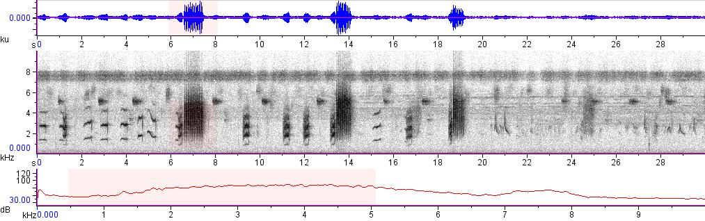 Sonogram of recording #AV 8196