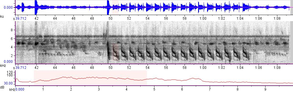 Sonogram of recording #AV 8205