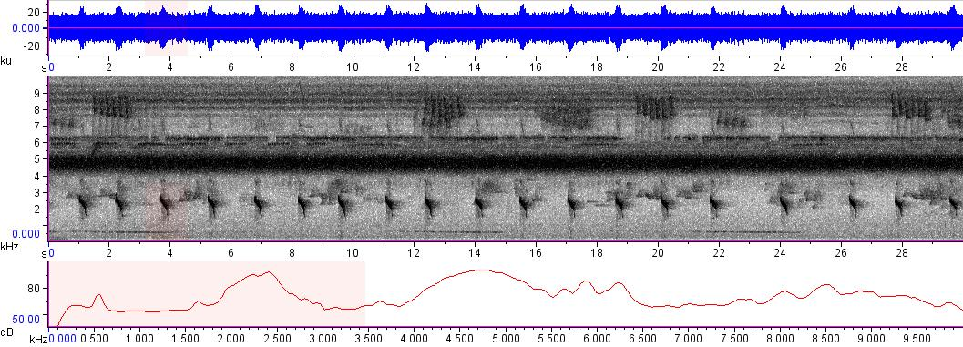Sonogram of recording #AV 8223