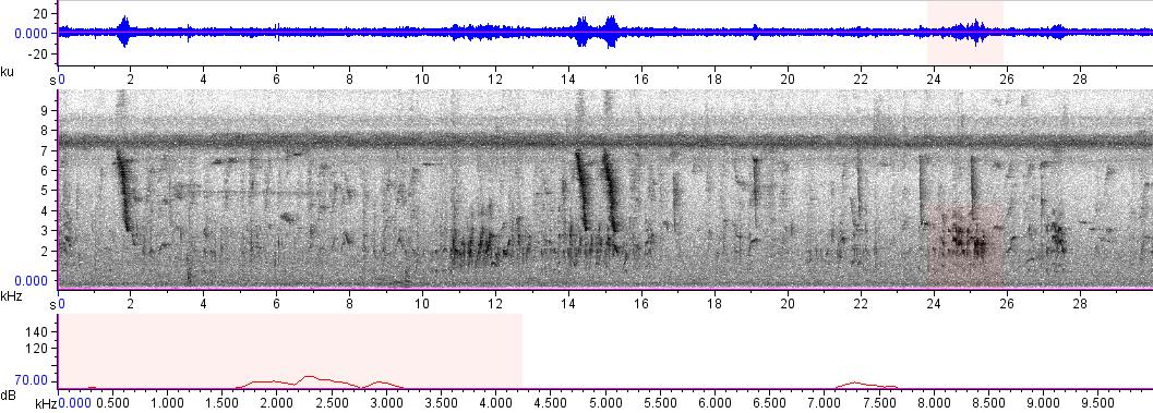 Sonogram of recording #AV 8230