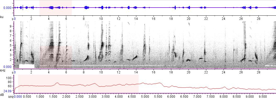 Sonogram of recording #AV 8232