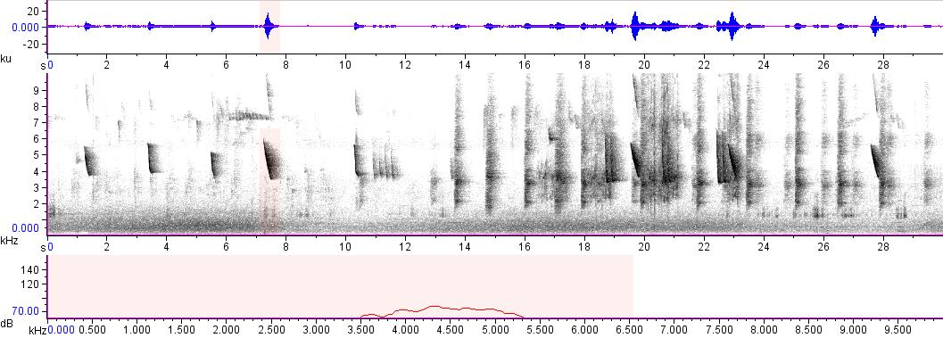 Sonogram of recording #AV 8239