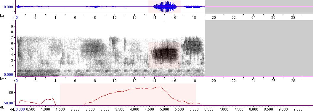 Sonogram of recording #AV 8262