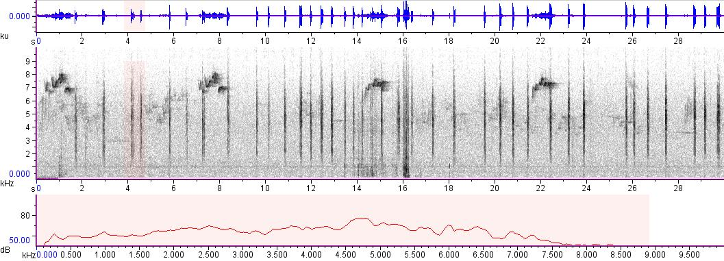 Sonogram of recording #AV 8268