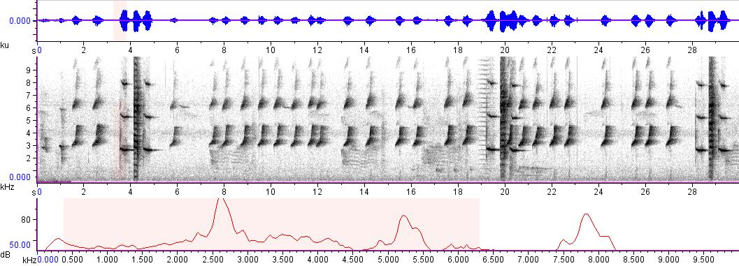 Sonogram of recording #AV 8274