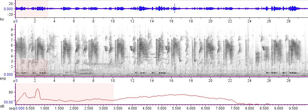 Sonogram of recording #AV 8326