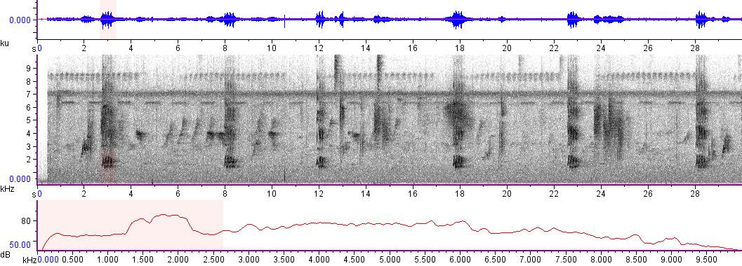 Sonogram of recording #AV 8358