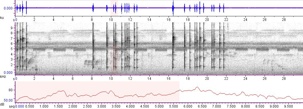 Sonogram of recording #AV 8363
