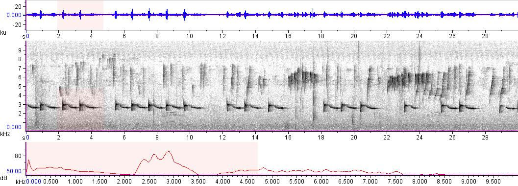 Sonogram of recording #AV 8382