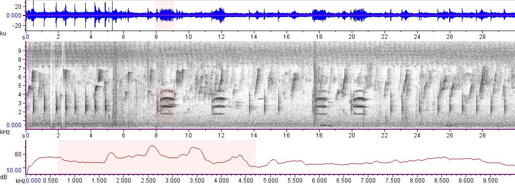 Sonogram of recording #AV 8383