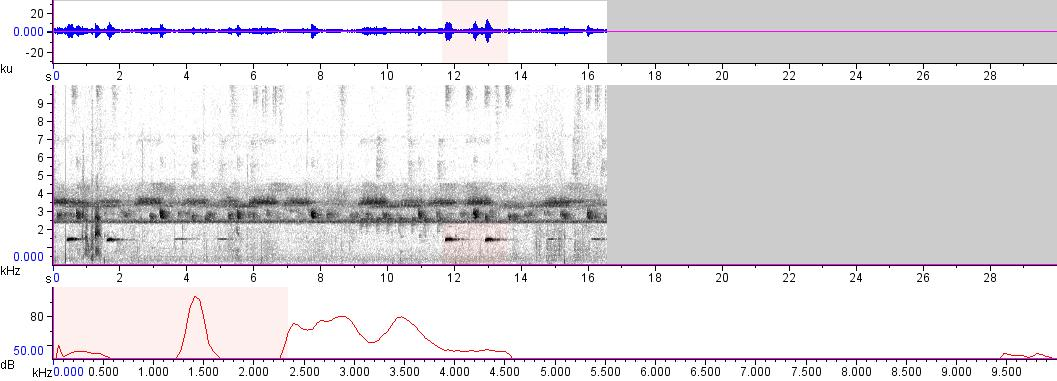 Sonogram of recording #AV 8397