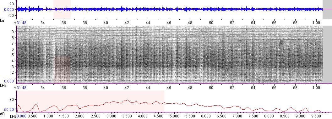 Sonogram of recording #AV 8405