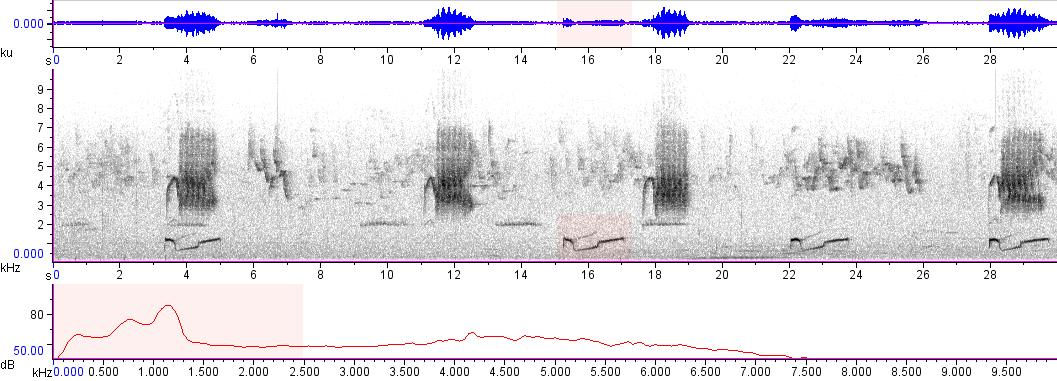 Sonogram of recording #AV 8430