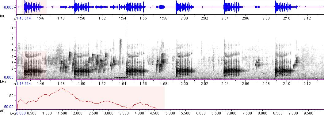 Sonogram of recording #AV 8447