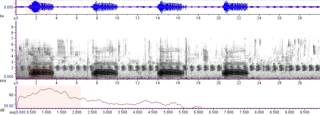 Sonogram of recording #AV 8448