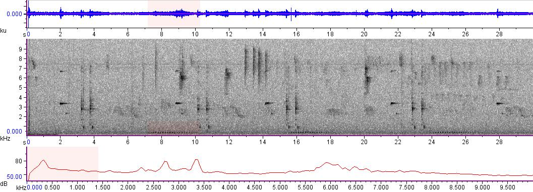 Sonogram of recording #AV 8458