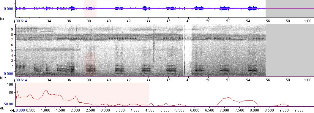Sonogram of recording #AV 8465